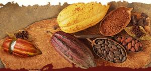 شکلات و پودر کاکائو